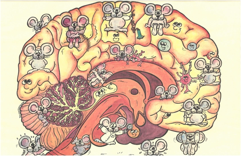 drawing of cartoon mice and a brain from Aryeh's office
